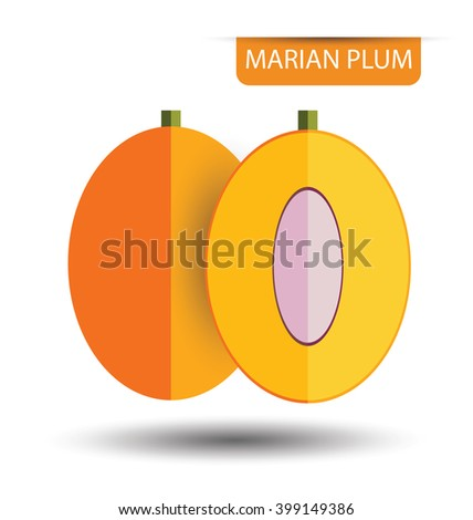 Marian plum or maprang (thai fruit) vector illustration - stock vector
