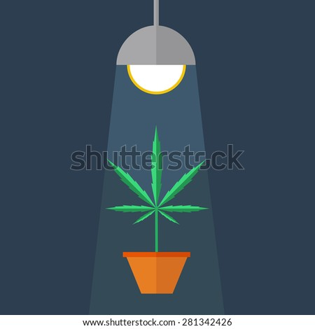 Marijuana grow box. Medical legal cannabis plant in pot under a built in light lamp. Leafs, strain and flowerpot. Growing marihuana concept. Flat style design. Colorful background icon - stock vector