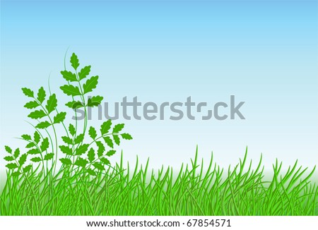 Meadow grass, sky and space for text