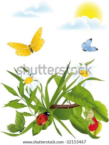 meadow of a chamomile a ladybird and butterflies - stock vector
