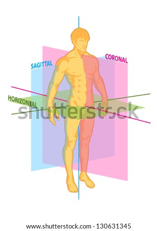 Median Coronal Horizontal Sagittal Planes Human Stock Vector