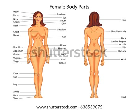 Diagram of a female body