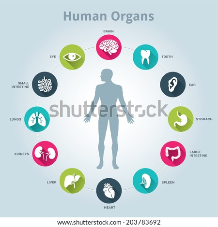 Medical human organs icon set with body in the middle - stock vector