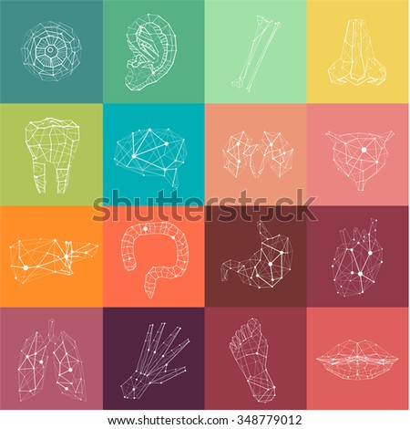 Medical Polygonal Symbols. Abstract Lined Color Set of icons: Tooth, Foot, Bladder, Intestine, Nose, Ear, Brain, Stomach, Liver, Kidneys, Lungs, Heart, Hand, Eye, Lips and Bones. - stock vector