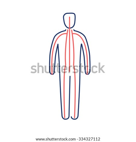 Meridians of the body red and blue linear icon on white background | flat design alternative healing illustration and infographic - stock vector