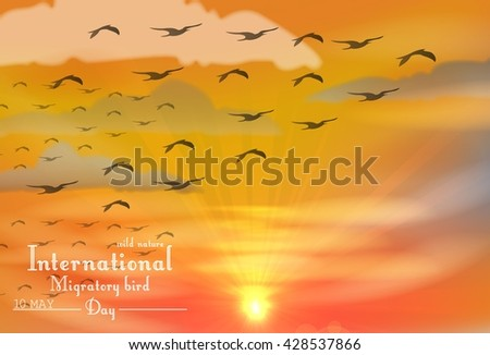 Migratory birds day on sunset.Vector