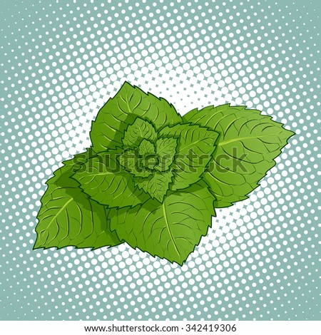 Mint leaves. Medicinal plant. Stock vector illustration. - stock vector