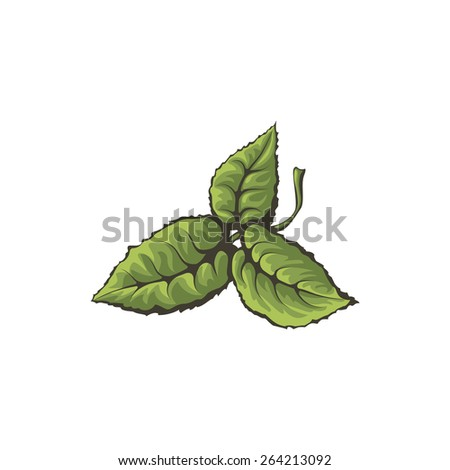 Mint leaves on a white background. Isolated vector illustration. - stock vector