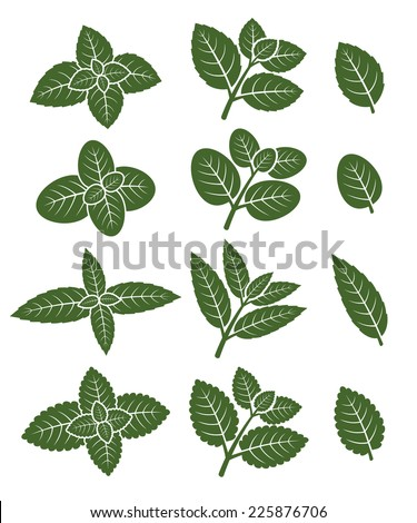 Mint leaves set. Vector - stock vector