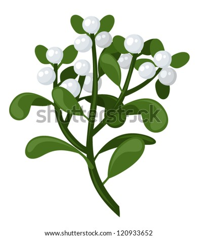 Mistletoe branch. Vector illustration. - stock vector