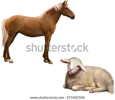 Mixed breed horse standing, Sheep laying down, Vector illustration isolated on white background - stock vector
