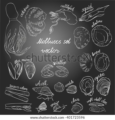 Molluscs set vector illustration. Black and white linear graphic, gradient background. Easy to scale. Perfect for restaurant business, decorating, textile printing etc.