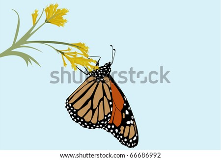 Monarch butterfly butterfly on a goldenrod flower. - stock vector