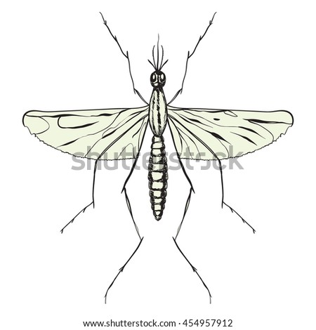 mosquito close-up isolated on white background. vector illustration