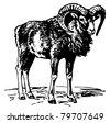 Mouflon - stock vector