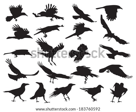 Moving silhouettes of crows on a white background. Set of vector illustrations. EPS 10. - stock vector