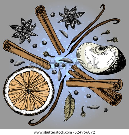 Mulled wine and its components. Christmas spice.  Set for mulled wine, fruits and spices. Vector illustration.