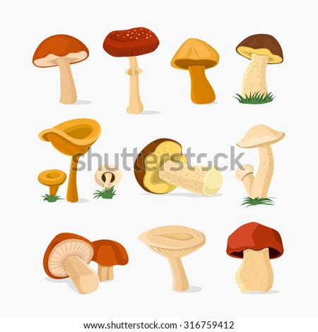 Mushroom set,  Vector illustration - stock vector