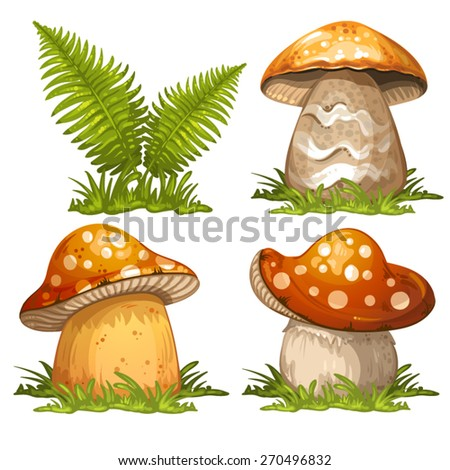 Mushrooms and ferns - stock vector