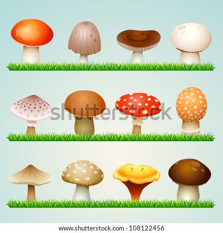 mushrooms on grass - stock vector