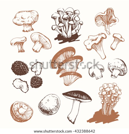 Mushrooms: shiitake, chanterelle, honey.  Hand drawn mushrooms. Sketch of mushrooms on white background. Hand-drawn sketch on white background. Fresh organic food. - stock vector