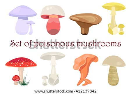 Mushrooms vector illustration set. Different types of mushrooms isolated on white background. Poisonous mushrooms flat style - stock vector