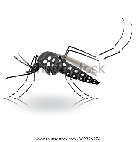 Nature, Aedes Aegypti mosquitoes stilt. Ideal for informational and institutional related sanitation and care - stock vector
