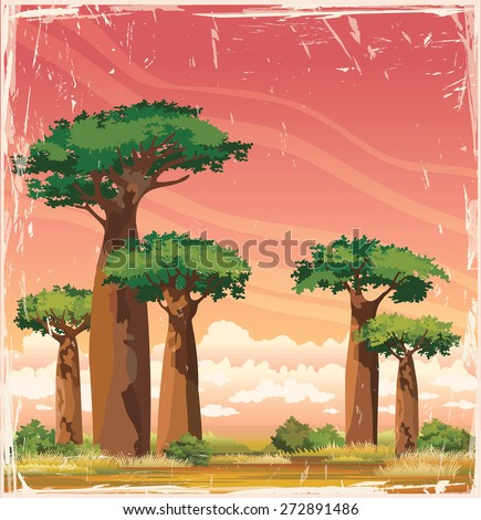 Nature african landscape - baobabs with green foliage on a sunset cloudy sky. Vector of Madagascar. - stock vector