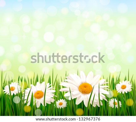 Nature background with green grass, daisies and a blue sky. Vector - stock vector