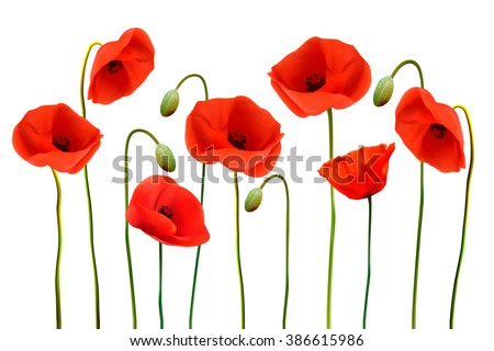 Nature background with red poppies. Vector. - stock vector