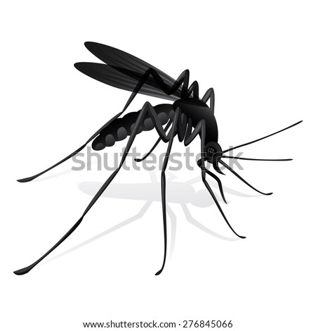 Nature, mosquitoes stilt disease transmitter. Ideal for informational and institutional sanitation and related care. - stock vector