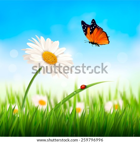 Nature spring daisy flower with butterfly. Vector illustration. - stock vector