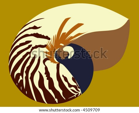 Nautilus Shell - stock vector