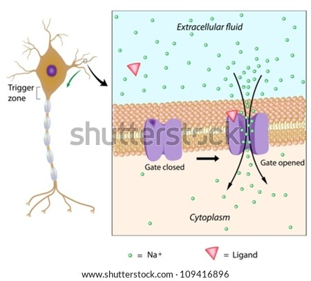 Neuron and local potential - stock vector