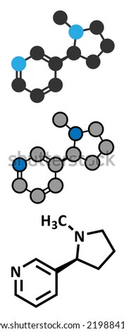 Nicotine tobacco stimulant molecule. Main addictive component in cigarette smoke. Atoms are represented as spheres with conventional color coding: hydrogen (white), carbon (grey), nitrogen (blue). - stock vector