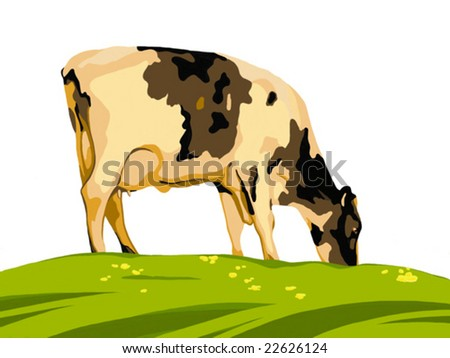 norman cow on a pasture