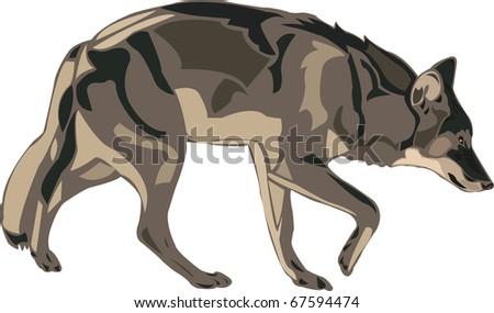 North American gray wolf. - stock vector
