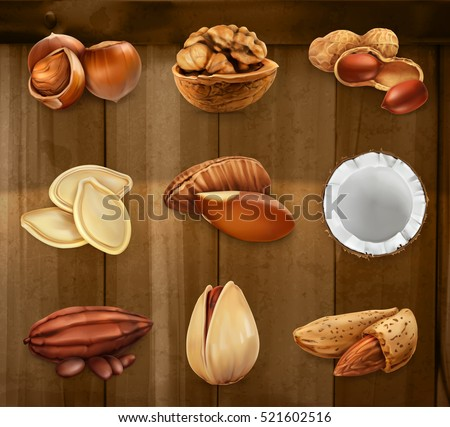 Nuts in the shell. Peanuts, pistachio, hazelnut, cocoa, walnut. Vector icon set