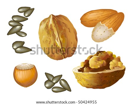 Nuts isolated - stock vector