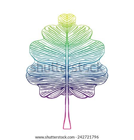 Oak leaf illustration - stock vector