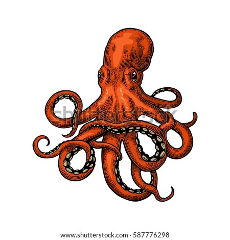 Octopus Vector Color Engraving Vintage Illustrations Stock ...
