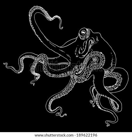 Octopus vector illustration.