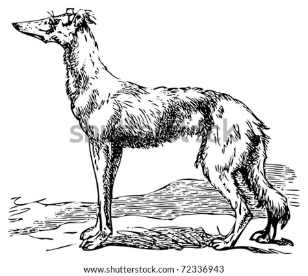 Old engraving of a Saluki or Borzoi dog, which are the oldest breed of hunting dogs. Scan from the Dictionnaire encyclop?dique Trousset, also known as the Trousset encyclopedia, Paris 1886 - 1891 - stock vector