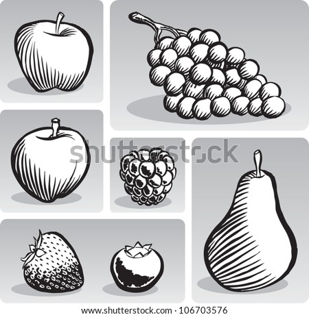 Old fashioned etched style illustration of some common fruit, presented individually, in black and white. - stock vector