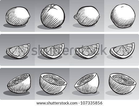 Old fashioned etched style illustration of various citrus fruit, depicted whole, sliced into a wedge, and sliced in half, all in black and white. - stock vector