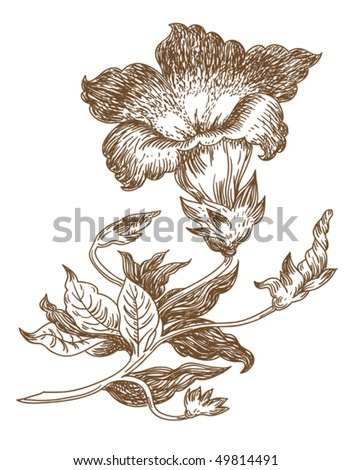 old-styled vector lily. freehand drawing - stock vector