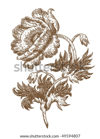 old-styled vector poppy. freehand drawing - stock vector