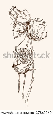 old-styled vector rose. Freehand drawing - stock vector