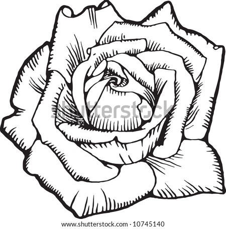 Old-time engraving of the Rose