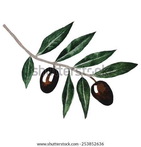 Olive branch in vintage style. Watercolor vector illustration isolated on white background. Eps10.